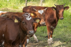 5 ways to make the most of manure